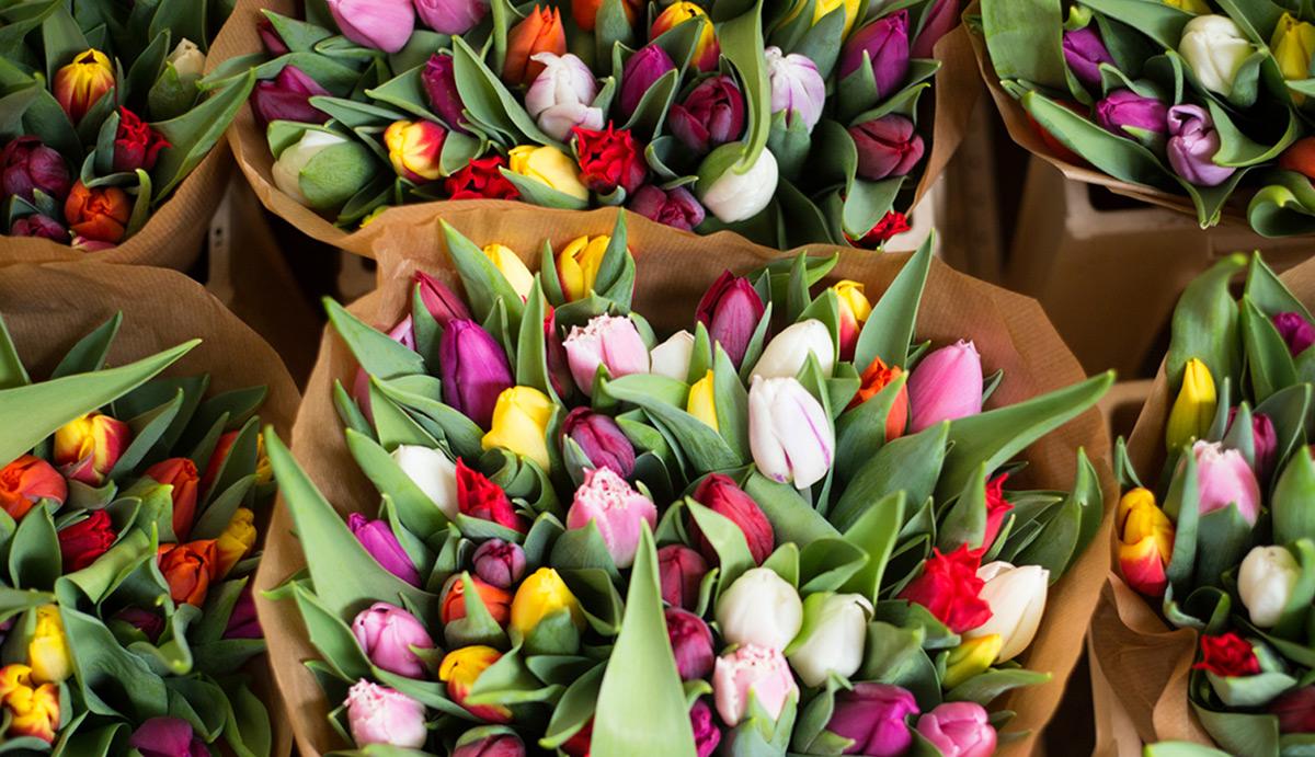 Barvna paleta: pozdrav pomladi