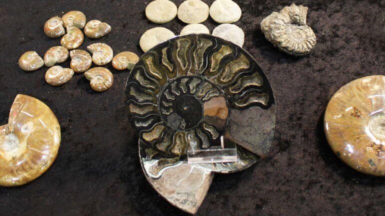 46. MINFOS – Mednarodni sejem mineralov, fosilov in okolja
