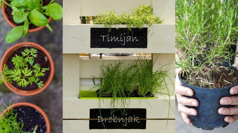 5 predlogov za gojenje zelišč v nivojih